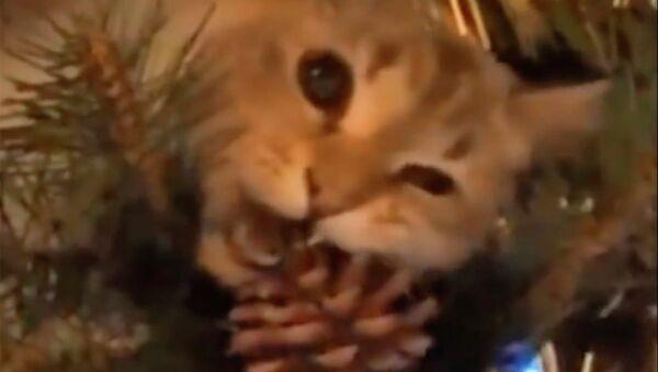 Кошки против ёлок. Видео - Sputnik Таджикистан
