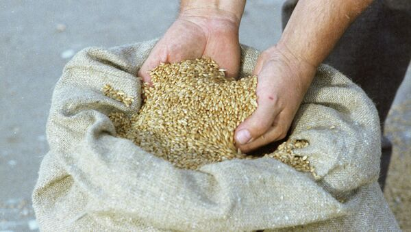 Пшеница, архивное фото - Sputnik Тоҷикистон