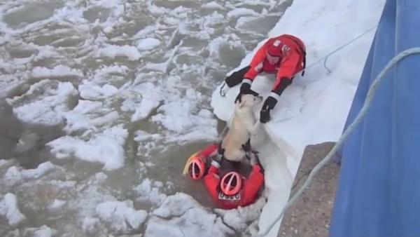 Спасение собаки из ледяной воды - Sputnik Таджикистан