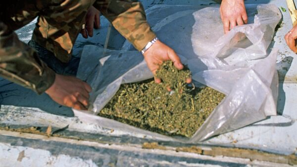 Конопля. Архивное фото - Sputnik Таджикистан