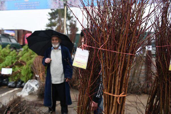 Ярмарка саженцев в Душанбе - Sputnik Таджикистан