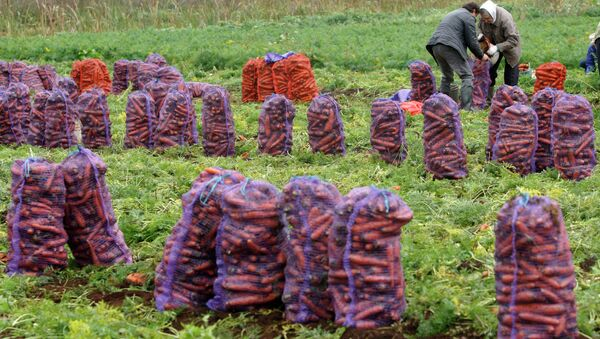 Сбор урожая, архивное фото - Sputnik Таджикистан