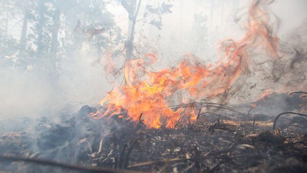 Лесной пожар, архивное фото - Sputnik Тоҷикистон