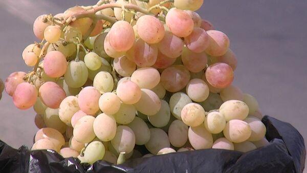 В Таджикистане в этом году выдался удачный сезон для винограда - Sputnik Таджикистан
