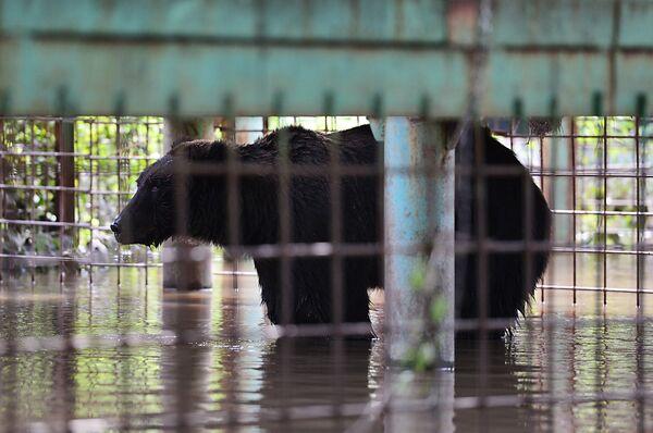 Уссурийский зоопарк после наводнения - Sputnik Таджикистан