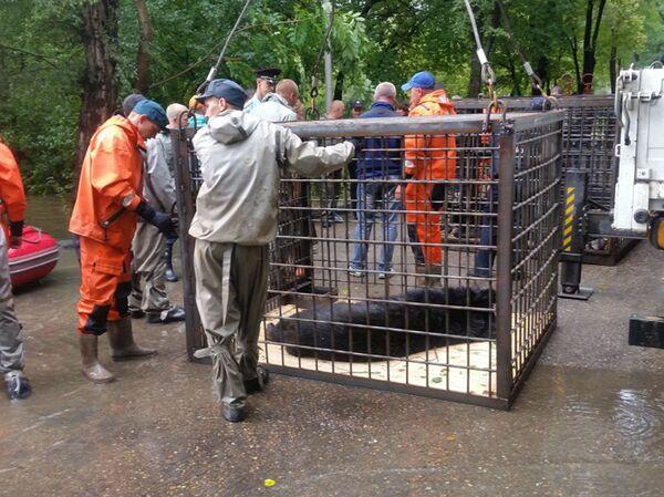 Эвакуация медведей из Уссурийского зоопарка - Sputnik Таджикистан