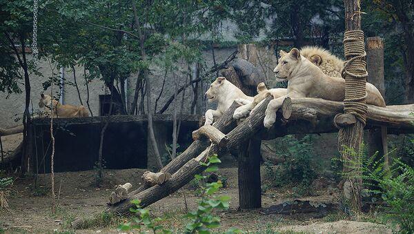 Тбилисский зоопарк: выжившие после наводнения - Sputnik Таджикистан