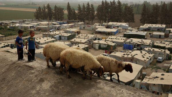 Сирийские мальчики пасут овец около сирийского лагеря беженцев в городе Дейр-Занун, долине Бекаа, Ливан.  - Sputnik Тоҷикистон