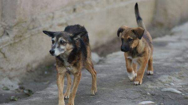 Бродячие собаки в Душанбе. Архивное фото - Sputnik Таджикистан