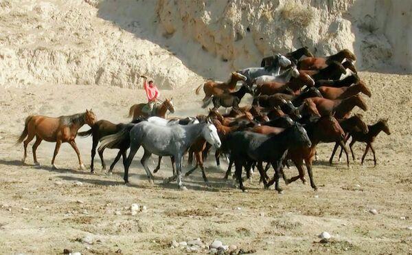 На пастбище в районе Абдурахмони Джоми Хатлонской области - Sputnik Таджикистан