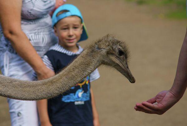 Посетитель кормит страуса. Архивное фото - Sputnik Таджикистан