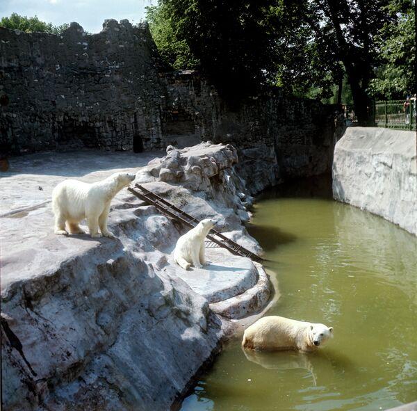 Белые медведи. Архивное фото. - Sputnik Таджикистан