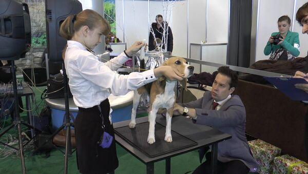 Приехали лучшие – в Кишиневе состоялась Международная выставка собак - Sputnik Таджикистан