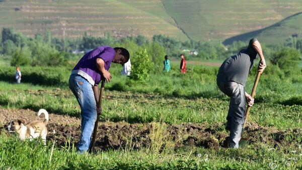 Мужчины работают в поле водном из кишлаков Таджикистана. Архивное фото. На деньги, заработанные в трудовой миграции, многие жители Таджикистана смогли приобрести земельные участки. - Sputnik Таджикистан