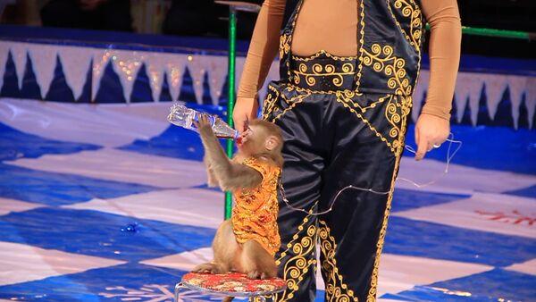 Цирковая обезьянка Лолита пьет колу и ест чупа - чупс - Sputnik Таджикистан