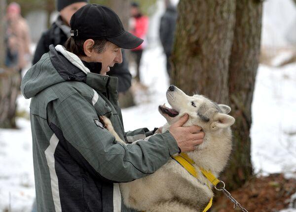 Гонки на собачьих упряжках под Минском - Sputnik Таджикистан