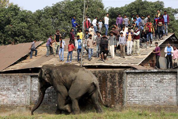 Дикий слон устроил погром на улицах города индийского Силигури в штате Западная Бенгалия - Sputnik Таджикистан