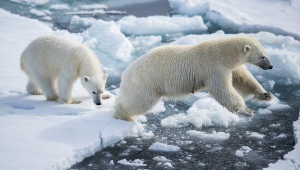 Белая медведица с медвежонком, архивное фото - Sputnik Таджикистан