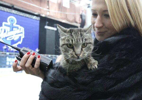 Талисман ХК Адмирал кошка Матроскина. Архивное фото - Sputnik Таджикистан