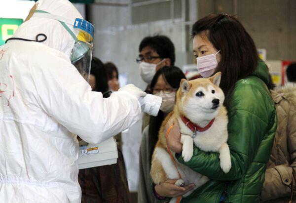Служащий в полной противорадиационной защите проверяет женщину с собакой на предмет заражения радиацией во время эвакуации из японского города Корияма. - Sputnik Таджикистан