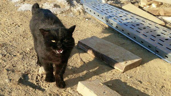 Кот, живущий в 100 метрах от стартового комплекса ракеты-носителя Союз на новом космодроме Восточный - Sputnik Таджикистан