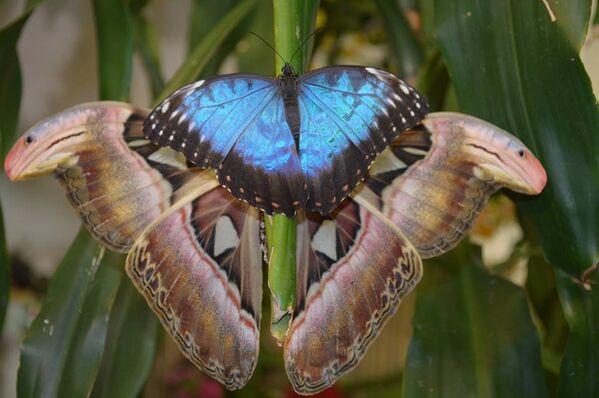 В музее живых бабочек в Санкт-Петербурге. Архивное фото - Sputnik Таджикистан