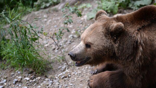 Медведь в природе - Sputnik Таджикистан