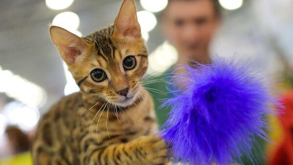 Международная выставка кошек, архивное фото - Sputnik Таджикистан