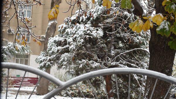 Первый снег в Душанбе: мороз и новогоднее настроение - Sputnik Тоҷикистон