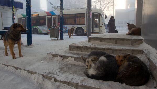 Бездомные собаки, архивное фото - Sputnik Таджикистан