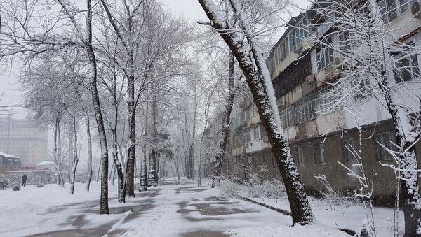 Улицы Душанбе напоминают северные города России: снег и метель - Sputnik Тоҷикистон