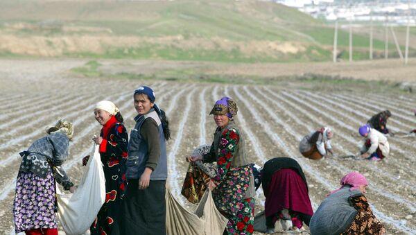 Сбор хлопка, архивное фото - Sputnik Таджикистан