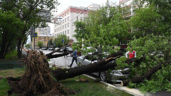 Последствия урагана в Москве - Sputnik Тоҷикистон