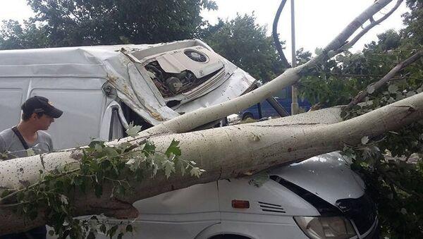 Сильный ветер опрокинул деревья, архивное фото - Sputnik Тоҷикистон