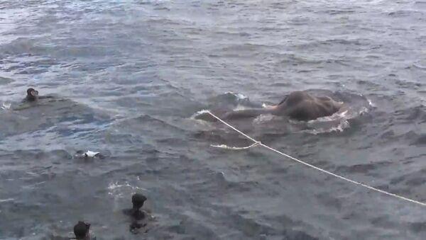 ВМС Шри-Ланки спасли унесенного в море слона - Sputnik Таджикистан