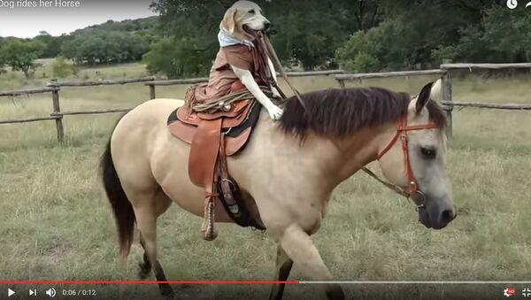 Видеофакт: собака из Техаса научилась ездить верхом на лошади - Sputnik Тоҷикистон