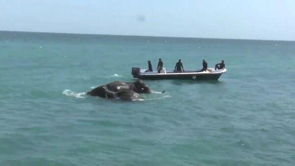Спасение унесенных в море слонов у берегов Шри-Ланки. Кадры операции - Sputnik Таджикистан