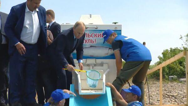Путин выпустил мальков в Байкал - Sputnik Тоҷикистон