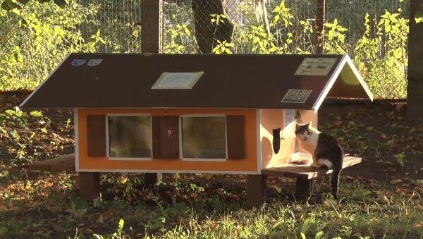 Рижанин построил 80 домиков для бездомных кошек - Sputnik Таджикистан