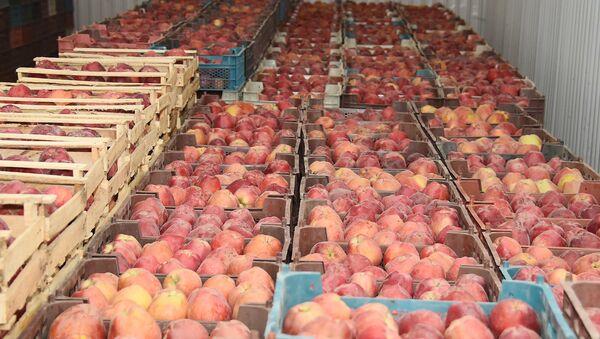 Сбор урожая в Таджикистане - Sputnik Таджикистан