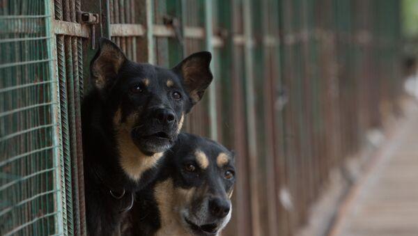 Приют для бездомных животных, архивное фото - Sputnik Таджикистан