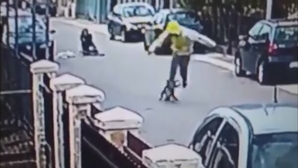 Уличный пес спас девушку, напав на грабителя, — видео из Черногории - Sputnik Тоҷикистон