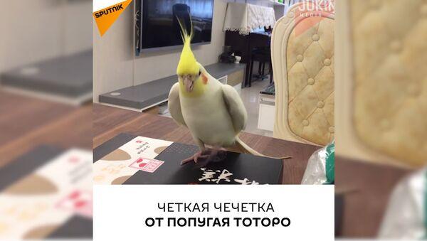 Четкая чечетка от попугая Тоторо - Sputnik Таджикистан