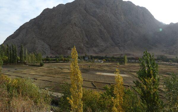 Рисовые поля в Таджикистане, скалы над ними - в Кыргызстане, архивное фото - Sputnik Таджикистан