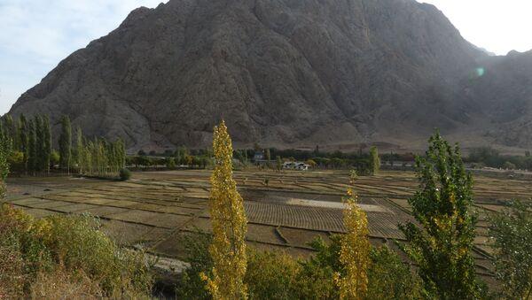 Рисовые поля в Таджикистане, скалы над ними - в Кыргызстане, архивное фото - Sputnik Тоҷикистон
