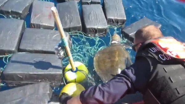 Спасение черепахи, застрявшей среди тюков с кокаином - Sputnik Тоҷикистон