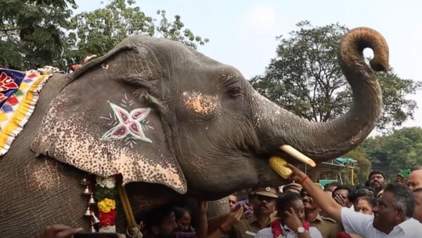 В Индии слонам устроили спа процедуры - Sputnik Тоҷикистон