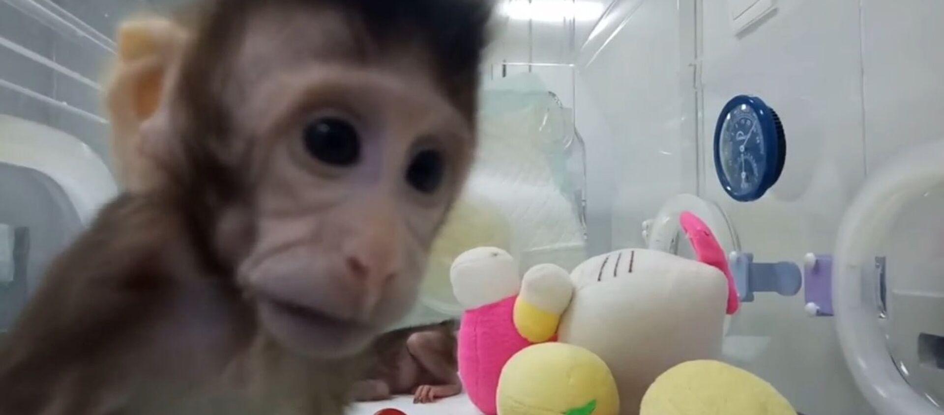 Китайские ученые показали первых в мире клонированных приматов - Sputnik Таджикистан, 1920, 26.01.2018