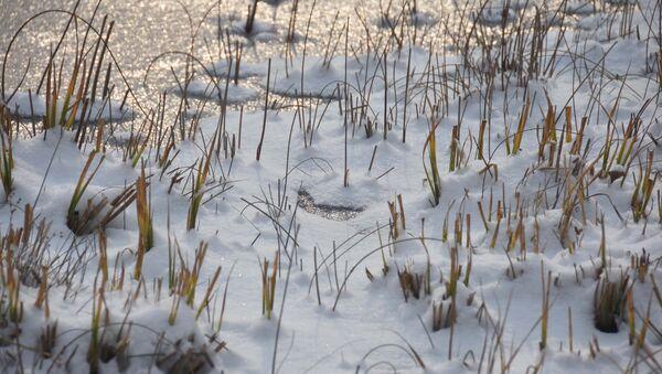 Замерший пруд в ботаническом саде, Боги Ирам, архивное фото - Sputnik Тоҷикистон