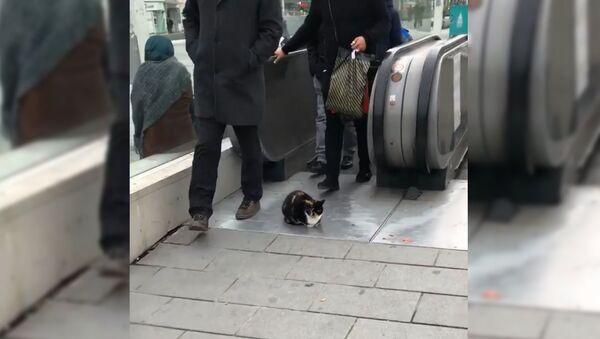 Невозмутимый кот парализовал движение на эскалаторе в Стамбуле - Sputnik Таджикистан